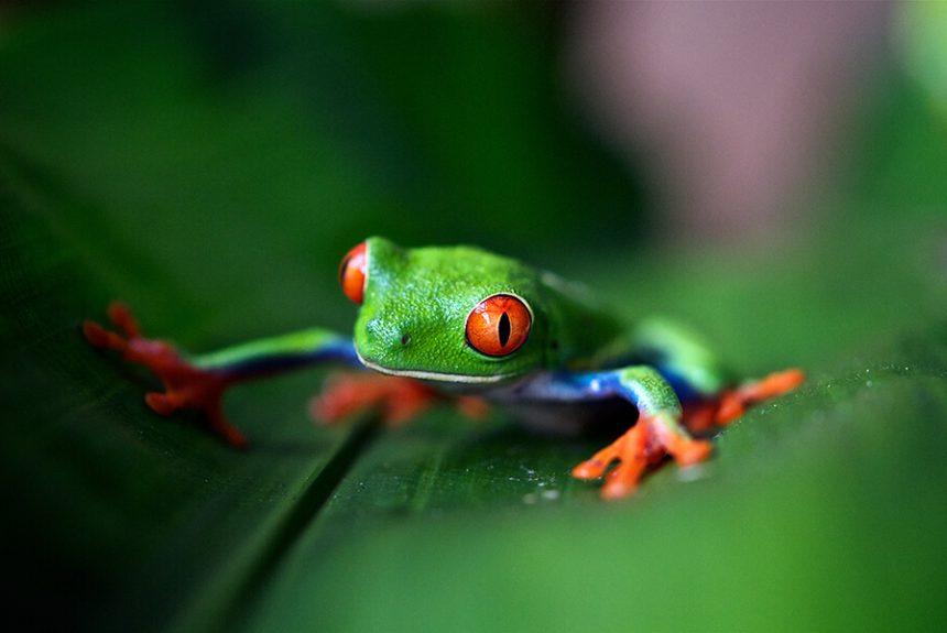 Amphibian Conservation